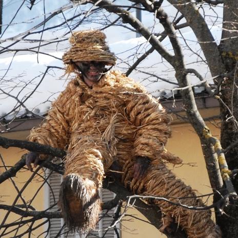 Valdieri Orso-albero